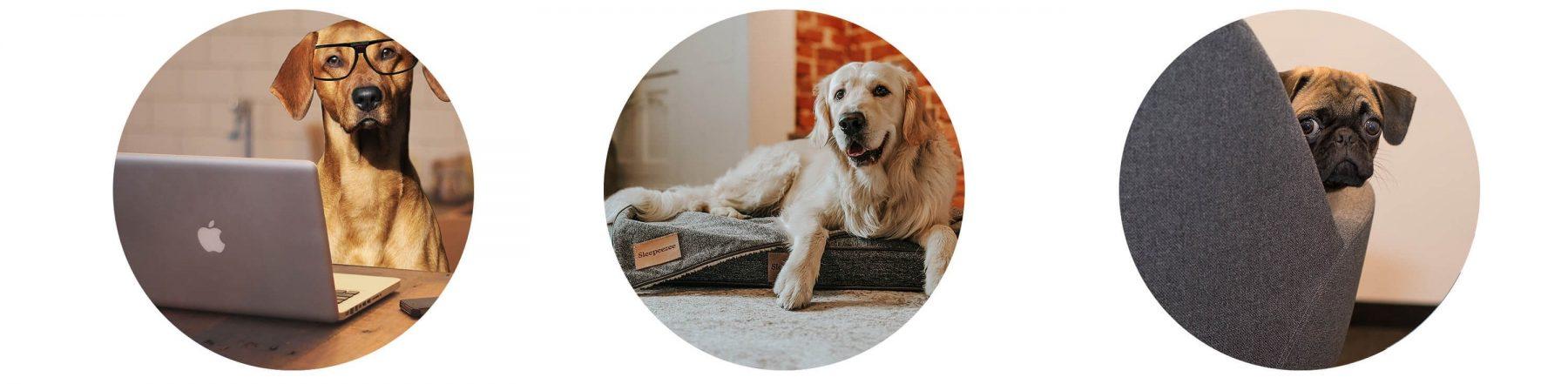 Office Dog Benefits